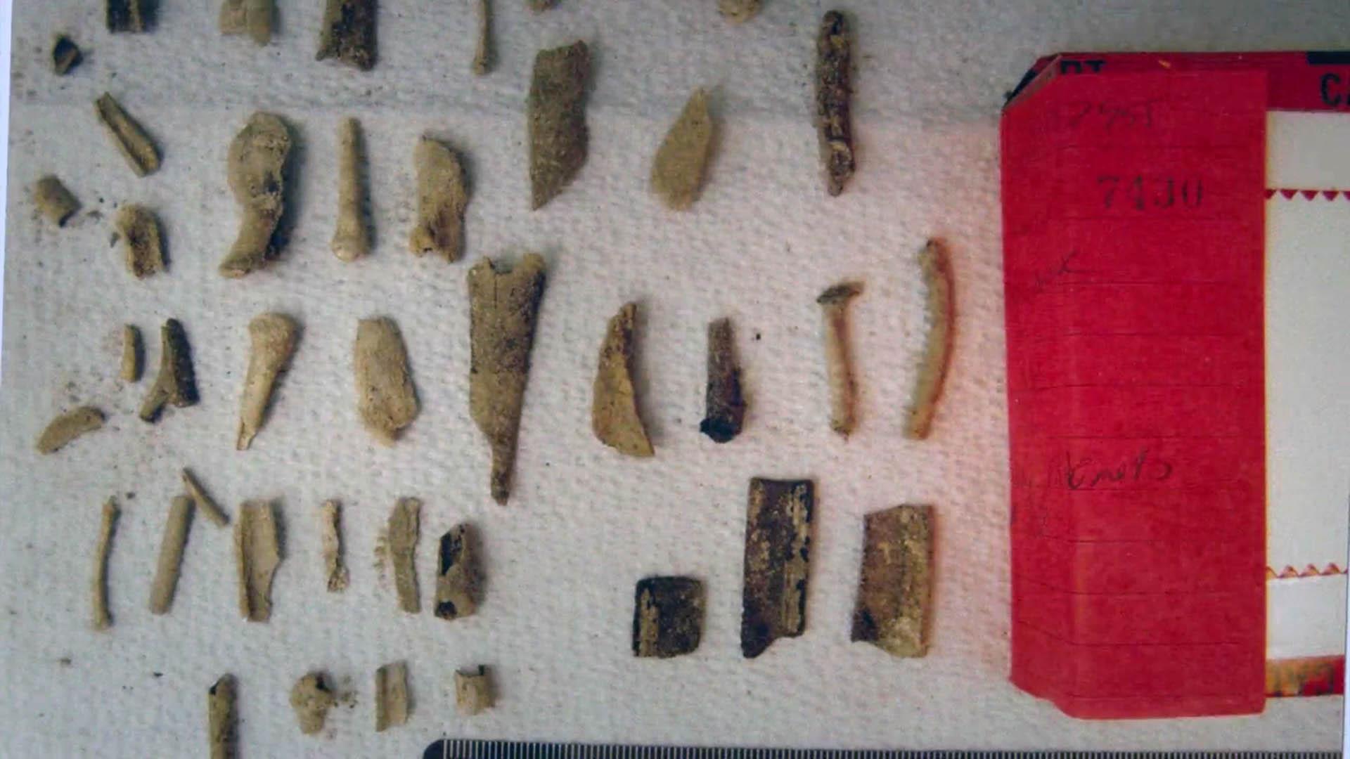 exhibit-bones-4