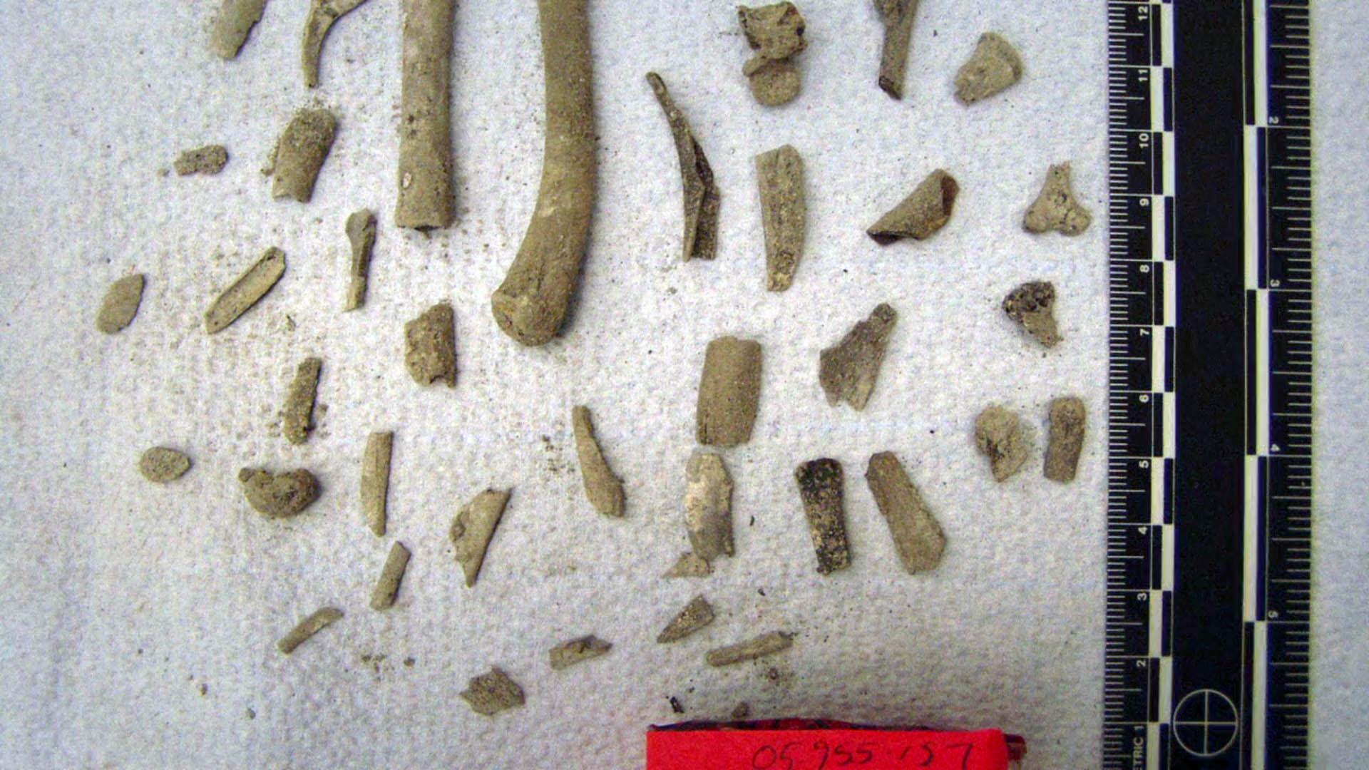exhibit-bones-6